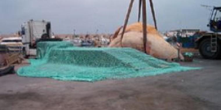 Red de carga para cachalote